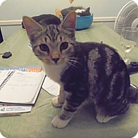 Adopt A Pet :: Baby Whiskers - Catasauqua, PA