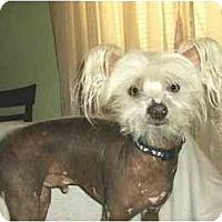 Adopt A Pet :: Peter - Mooy, AL