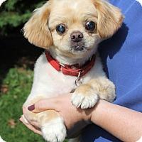 Adopt A Pet :: Bradley - Harrison, NY