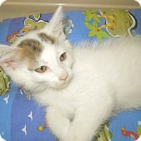 Adopt A Pet :: Murphy - Medina, OH