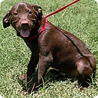 Adopt A Pet :: Hershey - West Hartford, CT