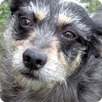 Adopt A Pet :: Rocco - Germantown, MD