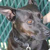 Adopt A Pet :: Bella - Lakeland, FL