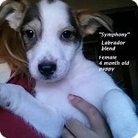 Adopt A Pet :: Symphony - El Cajon, CA