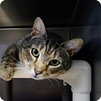 Adopt A Pet :: Blake - New Milford, CT