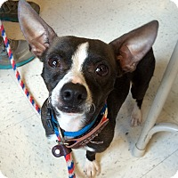 Adopt A Pet :: Varian in CT - Manchester, CT