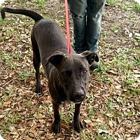 Adopt A Pet :: Buddy - Oviedo, FL