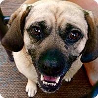 Adopt A Pet :: Tillie - Wakefield, RI