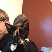 Adopt A Pet :: Jessica Drew - Putnam, CT