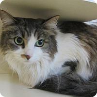 Adopt A Pet :: Puff - Kingston, WA