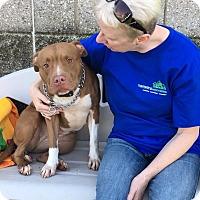 Adopt A Pet :: Nala - Wyandotte, MI