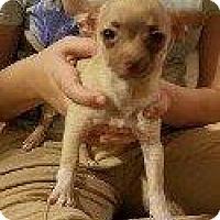 Adopt A Pet :: POOKA - Hampton, VA