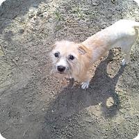 Adopt A Pet :: Suggs - Odessa, FL