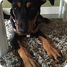 Adopt A Pet :: Baby Jenny