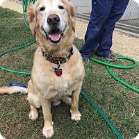 Adopt A Pet :: Morgan - New Canaan, CT