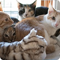 Adopt A Pet :: Chinese Buffet - Staten Island, NY