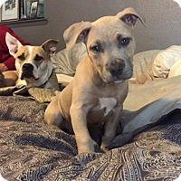 Adopt A Pet :: Parker - Concord, CA