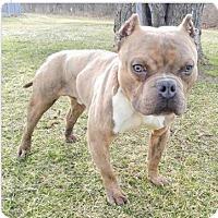 Adopt A Pet :: Marvin - Glenolden, PA