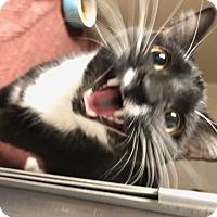 Adopt A Pet :: Francine - Alexandria, MN