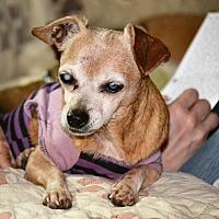 Adopt A Pet :: Pheebe - Melrose, FL