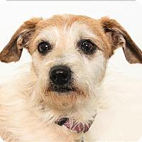 Adopt A Pet :: Karma - San Luis Obispo, CA