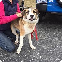Adopt A Pet :: SCOUT - Media, PA