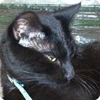 Adopt A Pet :: Tom - Omaha, NE