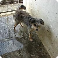 Adopt A Pet :: Stewie - Fort Scott, KS