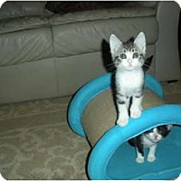 Adopt A Pet :: Tillie - Huffman, TX