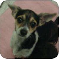 Adopt A Pet :: Cassandra - Phoenix, AZ