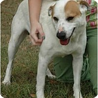 Adopt A Pet :: Buddy - Richmond, VA