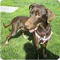 Adopt A Pet :: Coco URGENT - Sacramento, CA