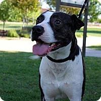 Adopt A Pet :: Lance - Owasso, OK