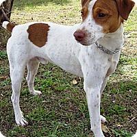 Adopt A Pet :: Jace in San Antonio - San Antonio, TX