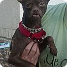 Adopt A Pet :: Fanny
