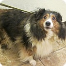 Adopt A Pet :: Abigail
