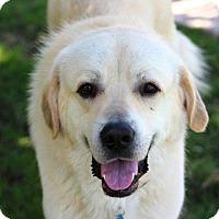 Adopt A Pet :: Riggs - Austin, TX
