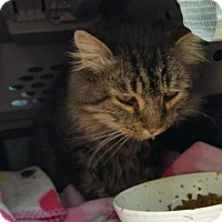Adopt A Pet :: Smokey - Willingboro, NJ