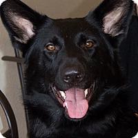 Adopt A Pet :: Karma - Patterson, CA