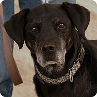 Adopt A Pet :: Buddy - Palmdale, CA