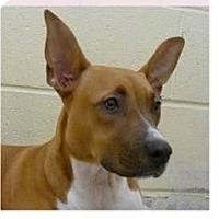 Adopt A Pet :: Sparkle - Springdale, AR