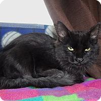 Adopt A Pet :: CHEYANNE - Medford, WI