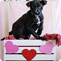 Adopt A Pet :: Albert - Waldorf, MD