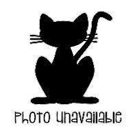 Adopt A Pet :: Baby - Irvine, CA