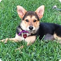 Adopt A Pet :: Kam - Royal Palm Beach, FL