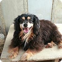 Adopt A Pet :: Spencer - Oakton, VA