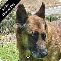 Adopt A Pet :: Sanders T. - Cupertino, CA