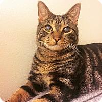 Adopt A Pet :: Juno - Long Beach, NY