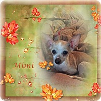 Adopt A Pet :: Mimi - Crowley, LA
