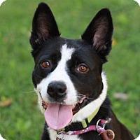 Adopt A Pet :: Lucy - LOVES KIDS! - Brattleboro, VT